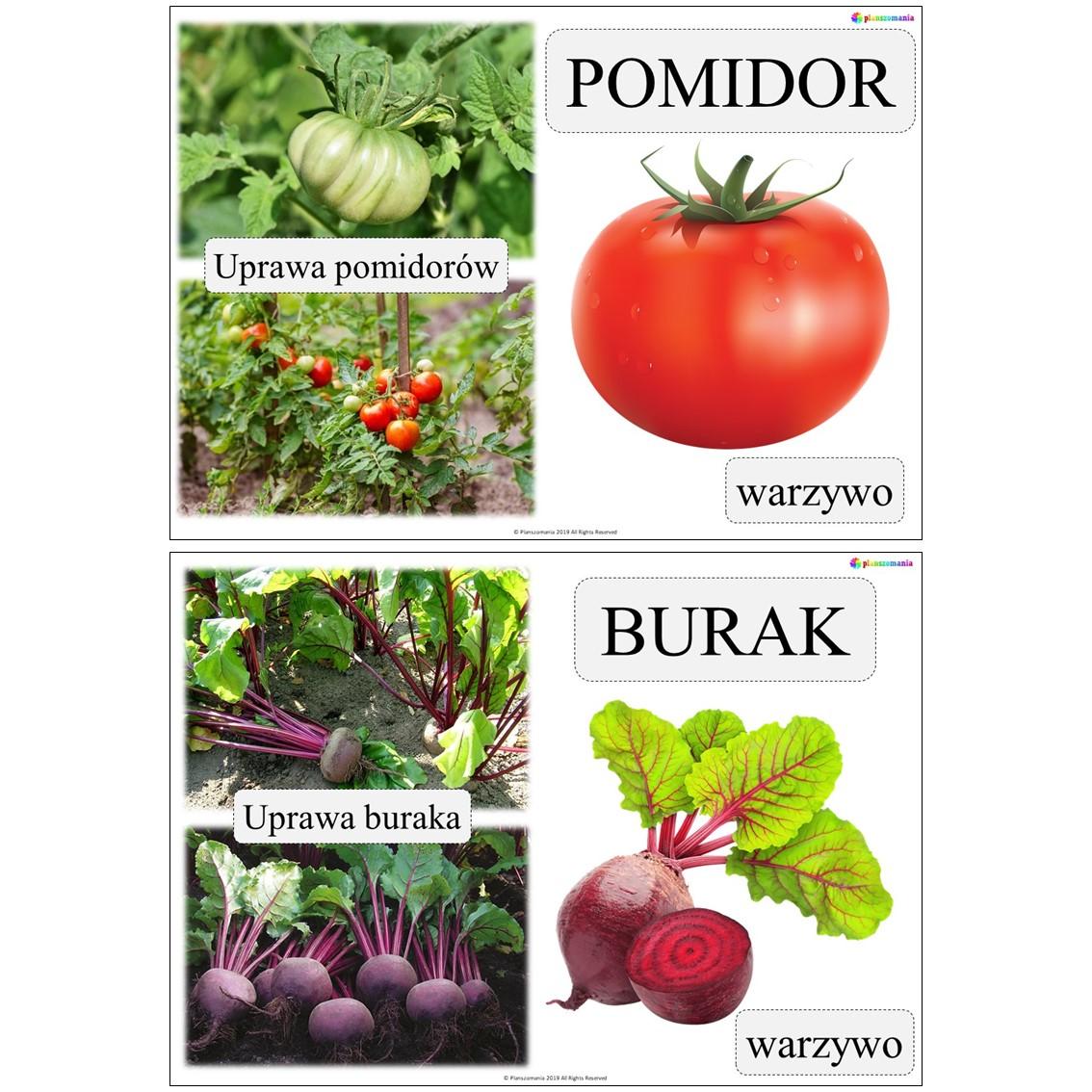 warzywa plansze pdf