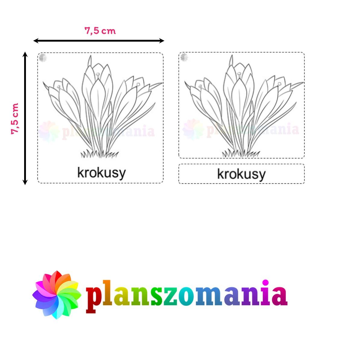 wklejki wiosenne kwiaty przebiśniegi sasanka zawilec wiosna plansze edukacja przedszkole planszomania do druku do zeszytu scenariusz pdf